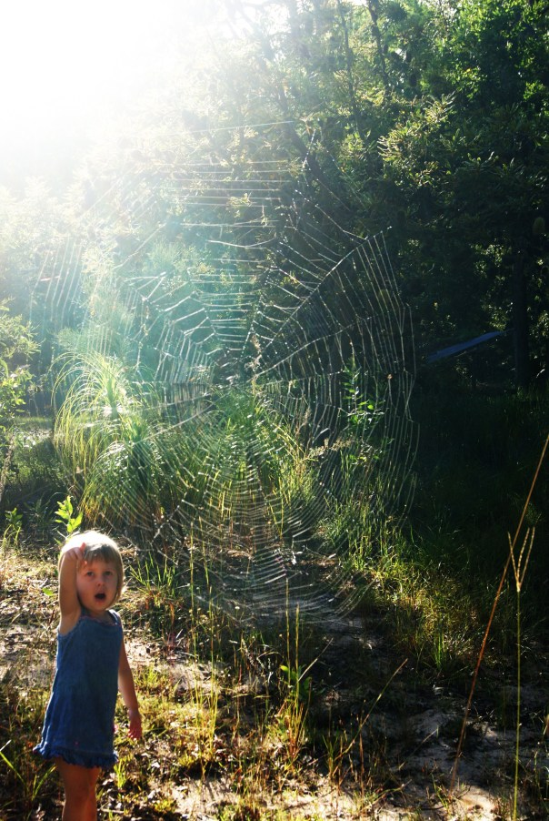 I spotted this amazing spider web as I drove down the driveway after dropping the girls at the bus stop. I HAD to try and photograph the way the light shone through. Beautiful.