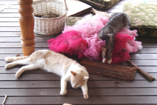 Pepper and Tinker bell living the high life.